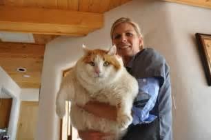 worlds largest cat