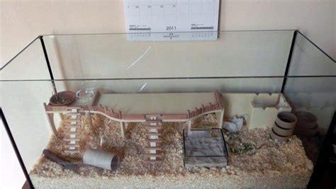 come costruire una gabbia per criceti criceti come creare un habitat naturale