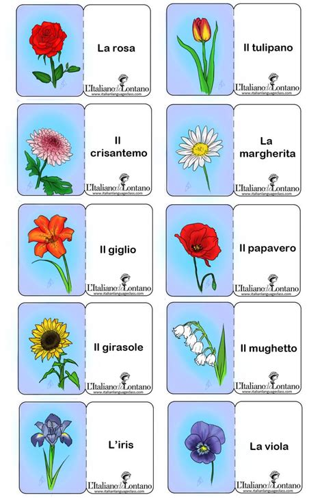 fiori italiani 182 best images about lingua italiana italian language