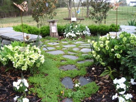 Small Memorial Garden Ideas Helleborus Memory Garden Plant Just A Cloud Away Inc Journal