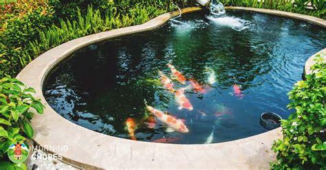 big reasons  build backyard ponds  improve  home