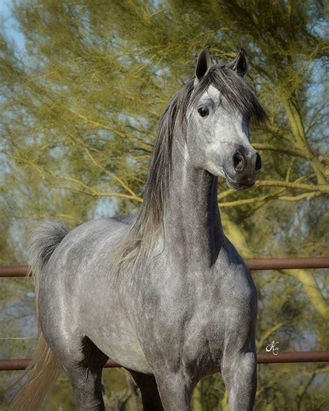 Ramona Grey Palomino 2078 best images about manes and tails on arabian horses white horses and palomino