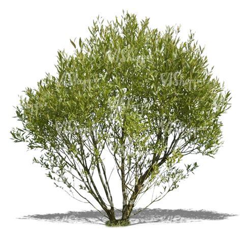 cut out big bush cut out trees and plants vishopper