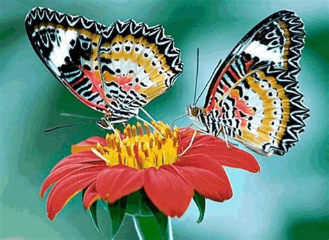 imagenes mariposas de colores brillantes mariposas de colores gif imagui