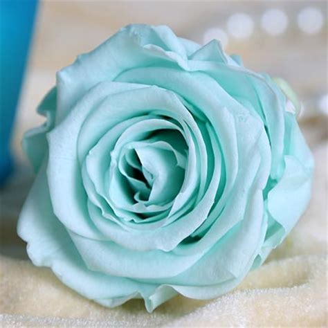 forever roses gift forever roses this with ferns n petals