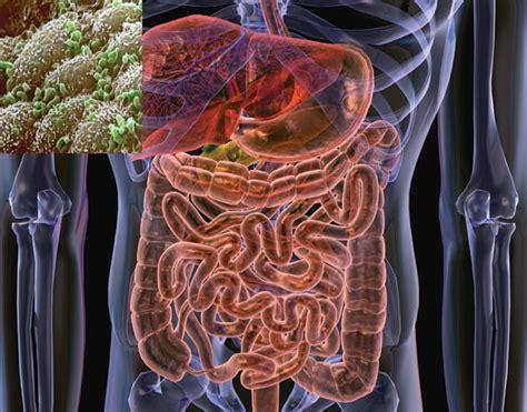 gut flora bacteria hella delicious