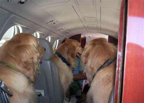 United Airlines Dogs In Cabin by Animal Cavalry Awesome Animals Using Other Animals And