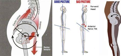 hip flexor diagram tight hip flexors and hamstring fight against