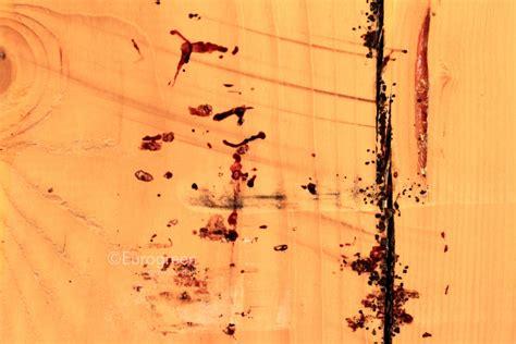 insetti letto cimice da letto archivi eurogreen
