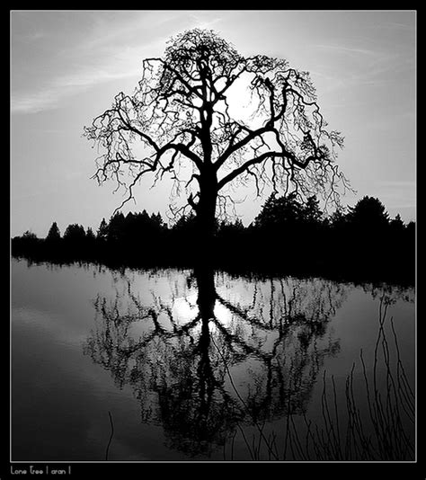 tree photography 50 beautiful exles of tree photography noupe