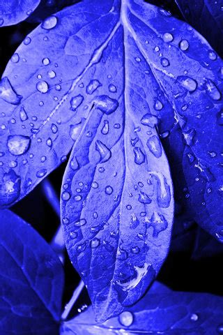 download blue drops leafs iphone wallpaper mobile