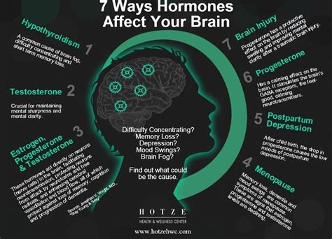 7 Ways In Which Affects Your by 7 Ways Hormones Affect Your Brain Hotze Health