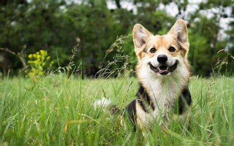 wann sterben bakterien hundeimpfung wann sollte ich meinen hund impfen stories