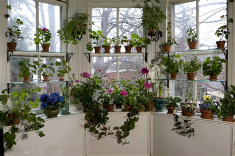 window gardening win a 50 shopping spree
