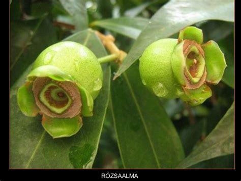 imagenes raras y bellas flores raras