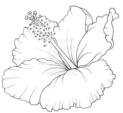 hibiscus plant coloring pages coloring pages