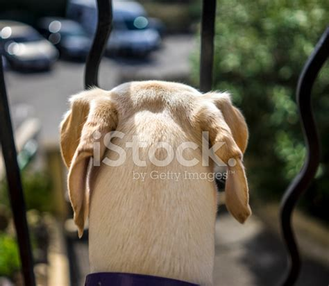dog guards for house the dog guards the house stock photos freeimages com