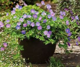 must grow new perennials for 2013 sun planters and the
