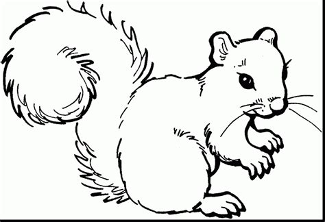 coloring pages canadian animals best cute baby squirrel coloring pages for kids womanmate