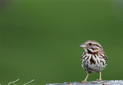 file wildlife birds 3 west virginia forestwander jpg