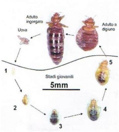 insetti da letto disinfestazione cimici da letto tecniche e prevenzione