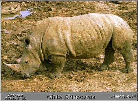 imagenes animales del zoologico animales en zoologicos taringa