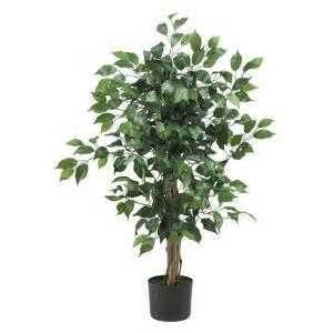 where can i buy a ficus tree the home depot community