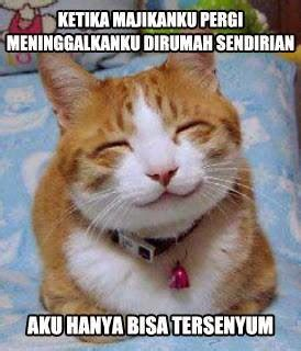 Meme Kucing - kicau angsa kumpulan meme kucing paling gokil dan menggelikan