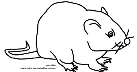 mewarnai gambar mewarnai gambar sketsa hewan tikus 1