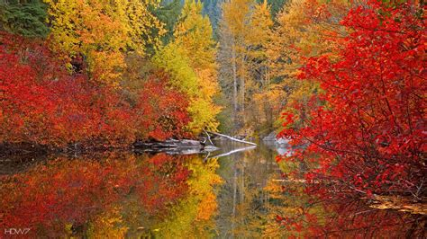 fall color fall color wallpaper 49 images