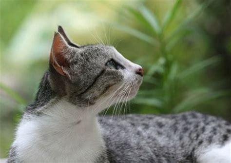 schuppen bei katzen tiere berichte page 6