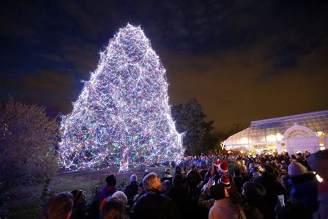 8 Most Beautiful Christmas Trees In America Toledo Zoo Lights