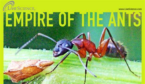 home remedies for sugar ants hrfnd