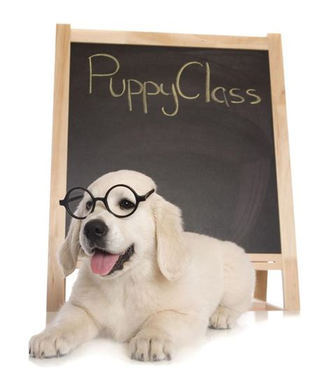 puppy classes services