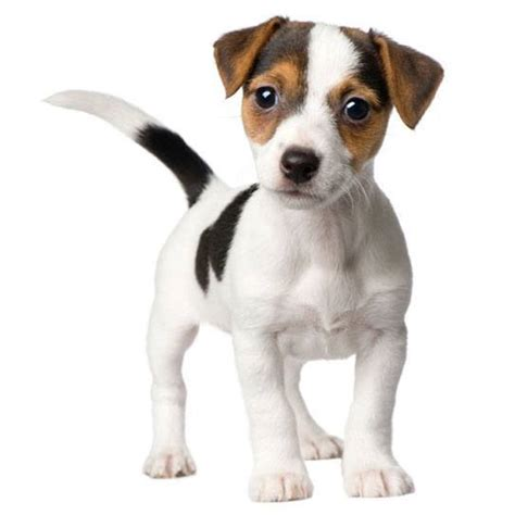 italian puppy names italian names for dogs images