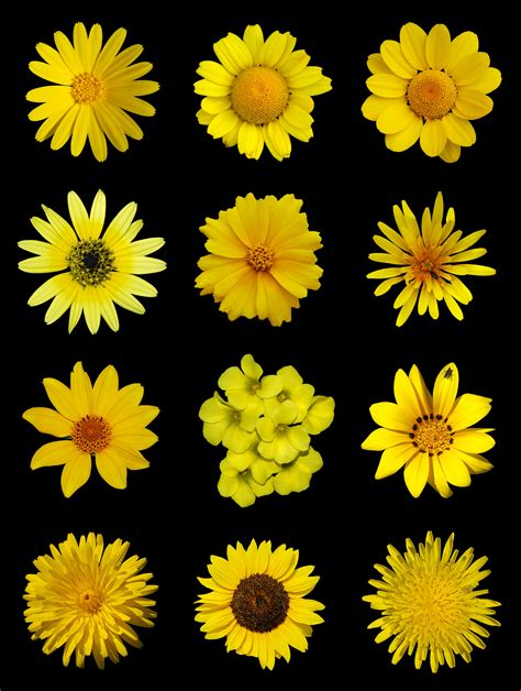 file yellow flowers a jpg wikimedia commons