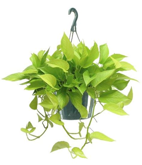 houseplants for low light areas 100 best vertical garden plant suggestions images on pinterest