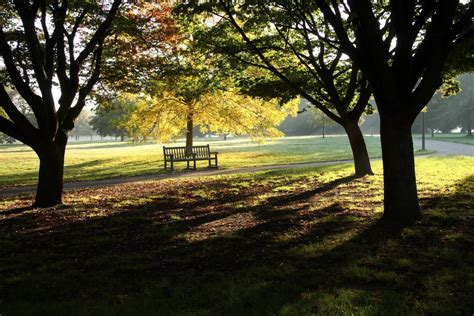 Panoramio Photo Of Hyde Park Bench