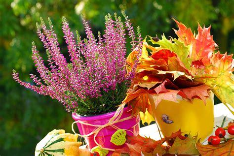 piante e fiori autunnali piante e fiori autunnali per il balcone tipitipi magazine