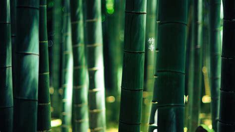 hd bamboo wallpapers pixelstalknet