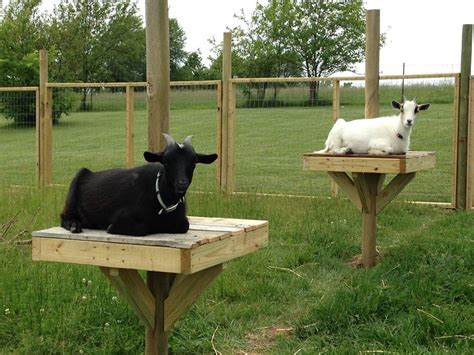 Small Dairy Goat Barn Plans Goat Perch Little Missouri Homestead