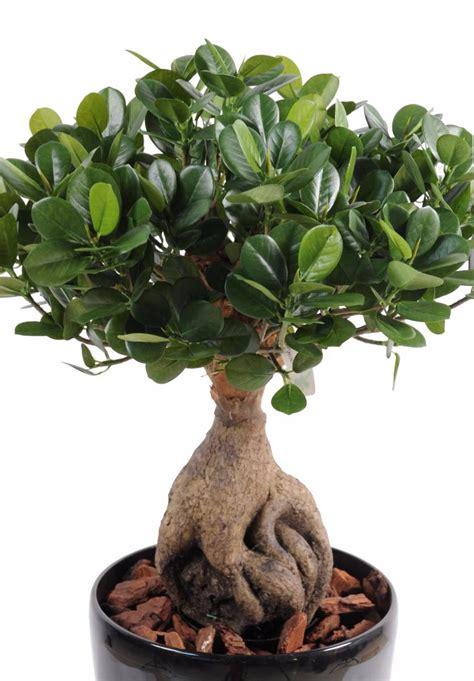 Attrayant Plante Exterieur Artificielle #6: Bonsai-artificiel-arbre-miniature-Ficus-Panda-Ginseng-plante-artificielle-d-.jpg