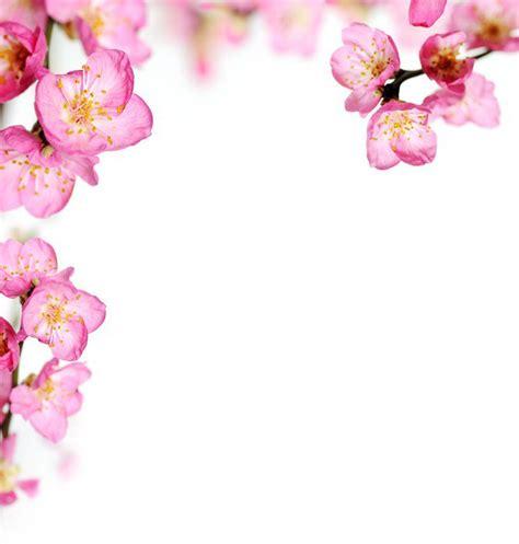 cornice di fiori carta da parati in vinile fiori di pesco cornice pixers