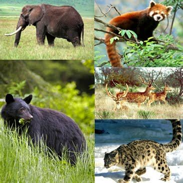 Animal Indian discover india animals in india