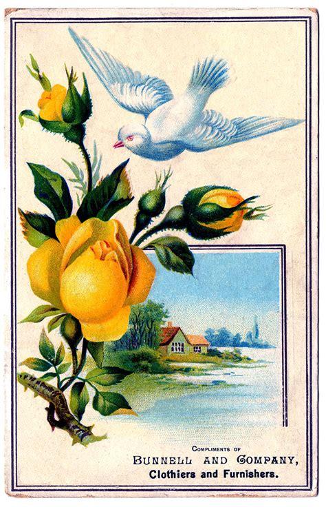 vintage graphic bright yellow rose  pretty dove