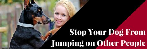 how to stop your from jumping on other