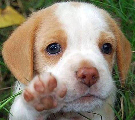 5 in 1 puppy puppy hi 5 luvbat