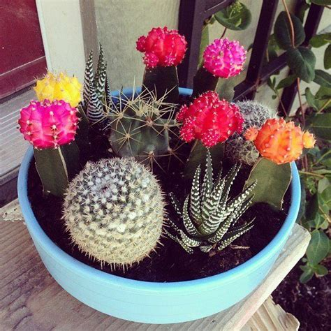 mini cactus planter  diyhomemade projects cactus