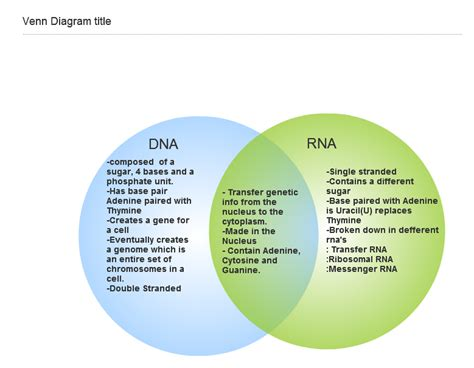 dna replication and protein synthesis venn diagram chapter 8 from dna to proteins mr krueger s biology