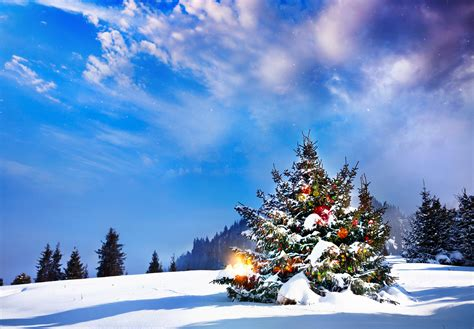 images of christmas nature photos new year nature spruce new year tree sky snow landscape